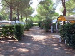 Piazzole e vialetto campeggio