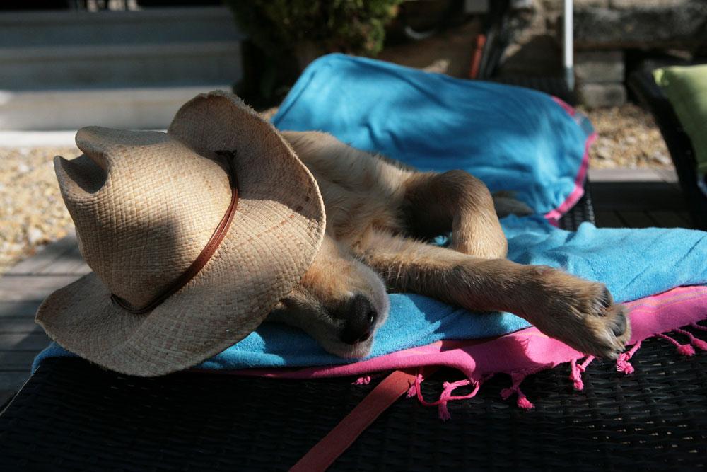 Spiagge accessibili ai cani Toscana